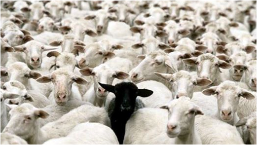 ob_a18b2c_capture-mouton-noir